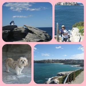 ada anjing yg ikutan coastal walk juga loh :)