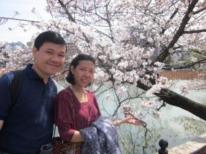 Sakura Blossom !