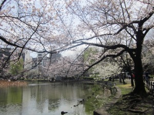 Beautiful View @ Ueno Park