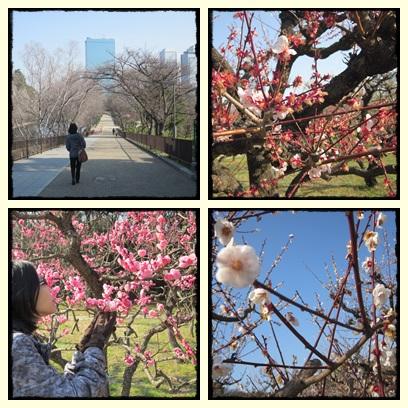 Japan : 22-31 March 2014 (part 2-Osaka,Kyoto,Nara,Kobe) (3/6)