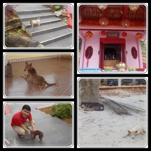 Anjing2 penunggu kuil, hehe..