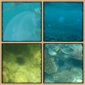 Yang transparan itu jelly fish (ubur2)
