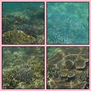 Soft coral di Oar