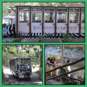 Transportasi keliling Safari : mobil atau naik gajah ?