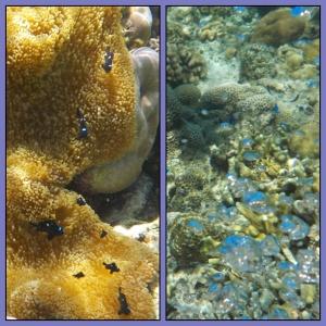 Ikan mini yg cantik dan bubble anak ikan - dari telur mau menetas ini sepertinya. Keren !