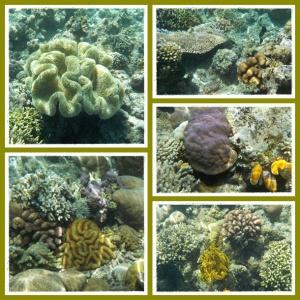 Terumbu karang aneka jenis dan warna