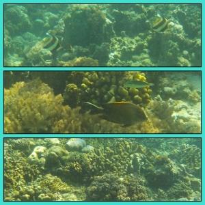 timur fish