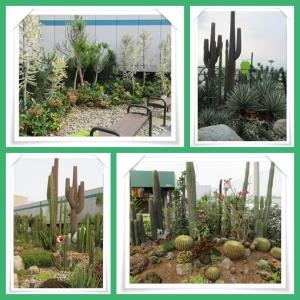 Taman kaktus @ Changi